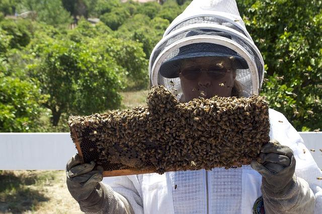 medonosné včely