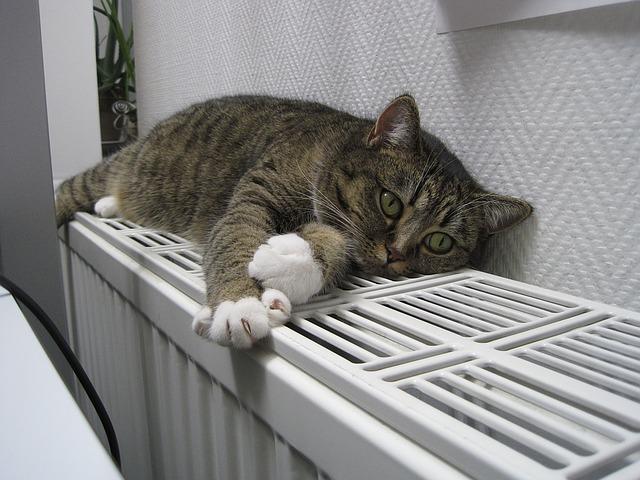 kocour na radiátoru