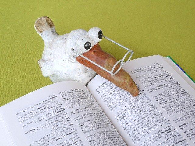 pták nad knihou