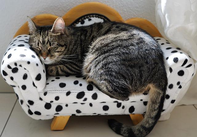 kočičí gauč