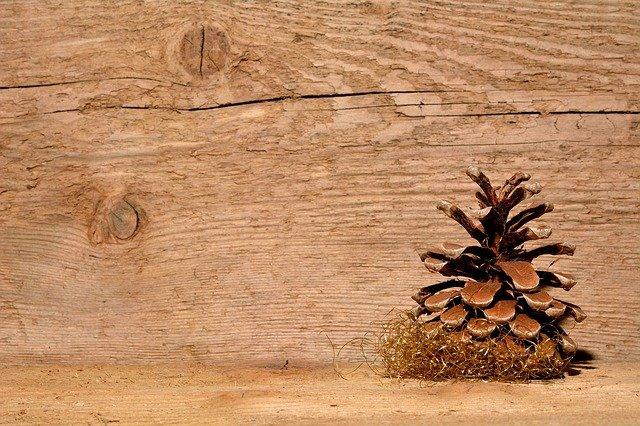 borová šiška.jpg